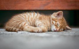 Distributeur croquette chat