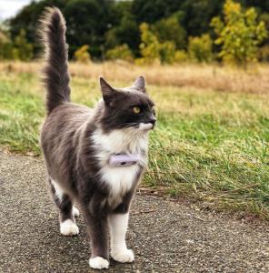 chat se baladant avec weenect