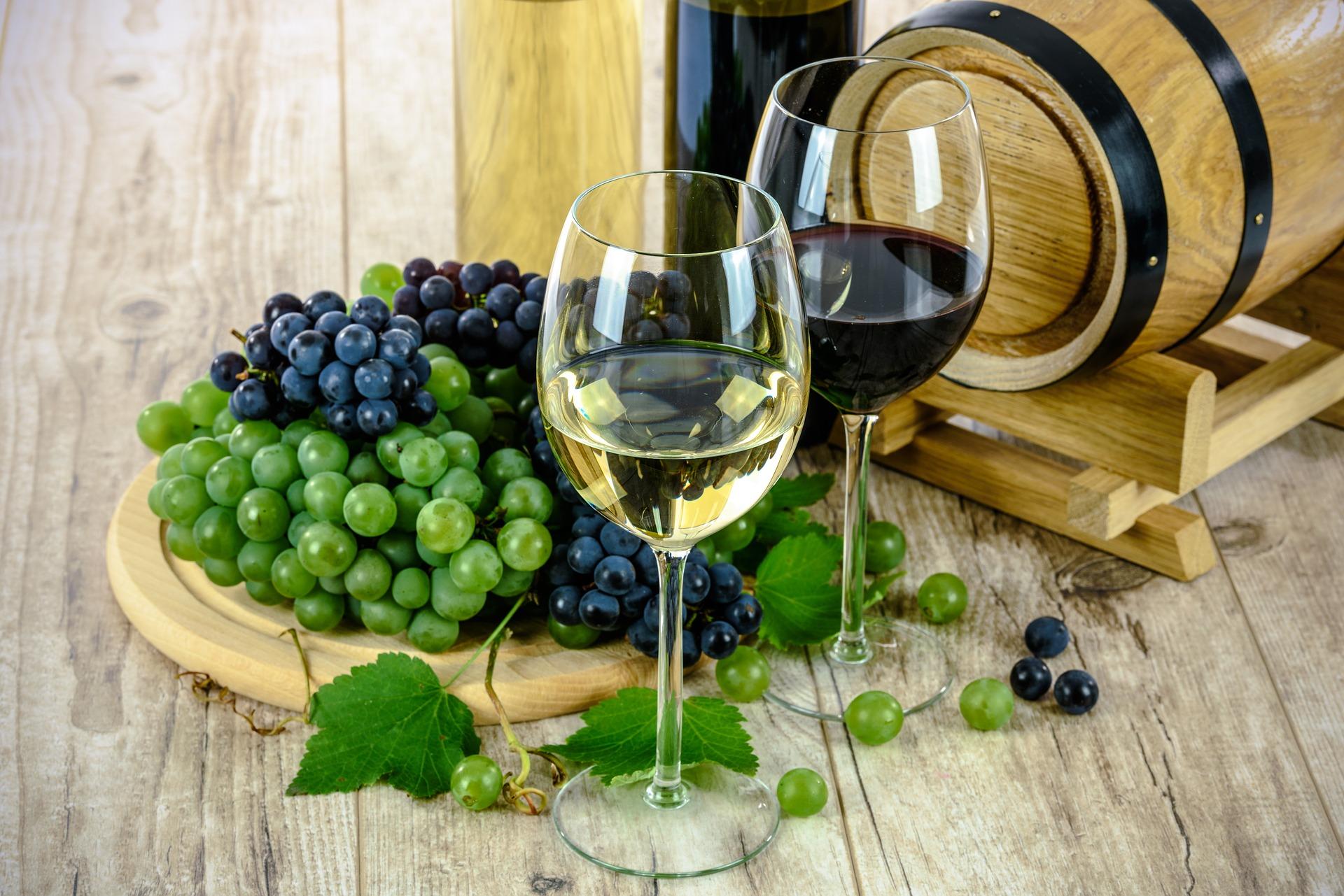 meilleur vins bio du monde
