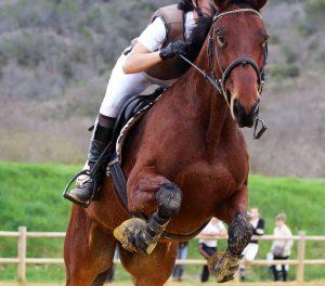 bottes équitation