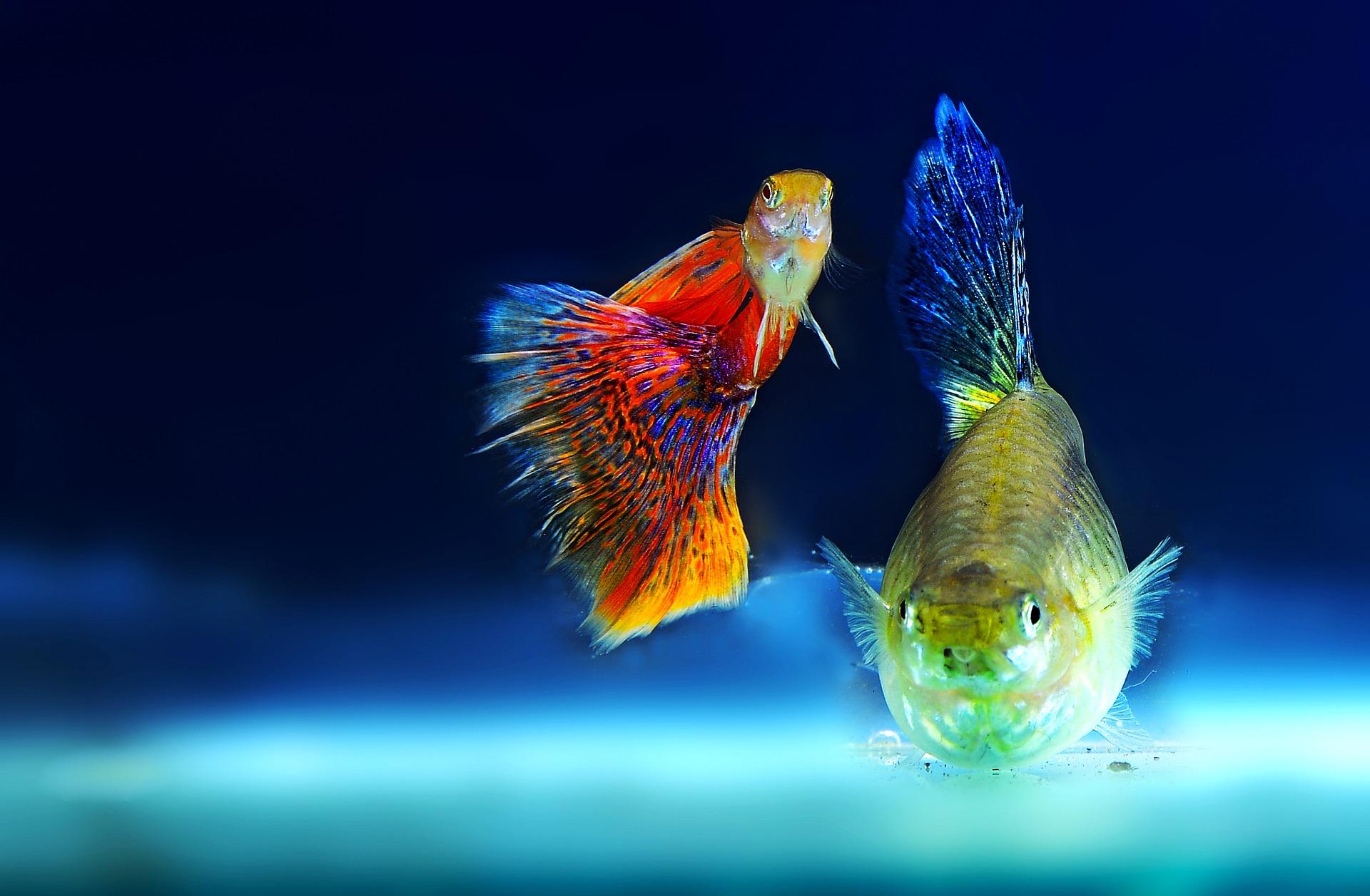 éclairage led aquarium