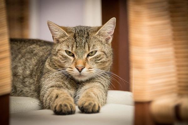 destructeur urine chat