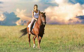 gps randonnee cheval