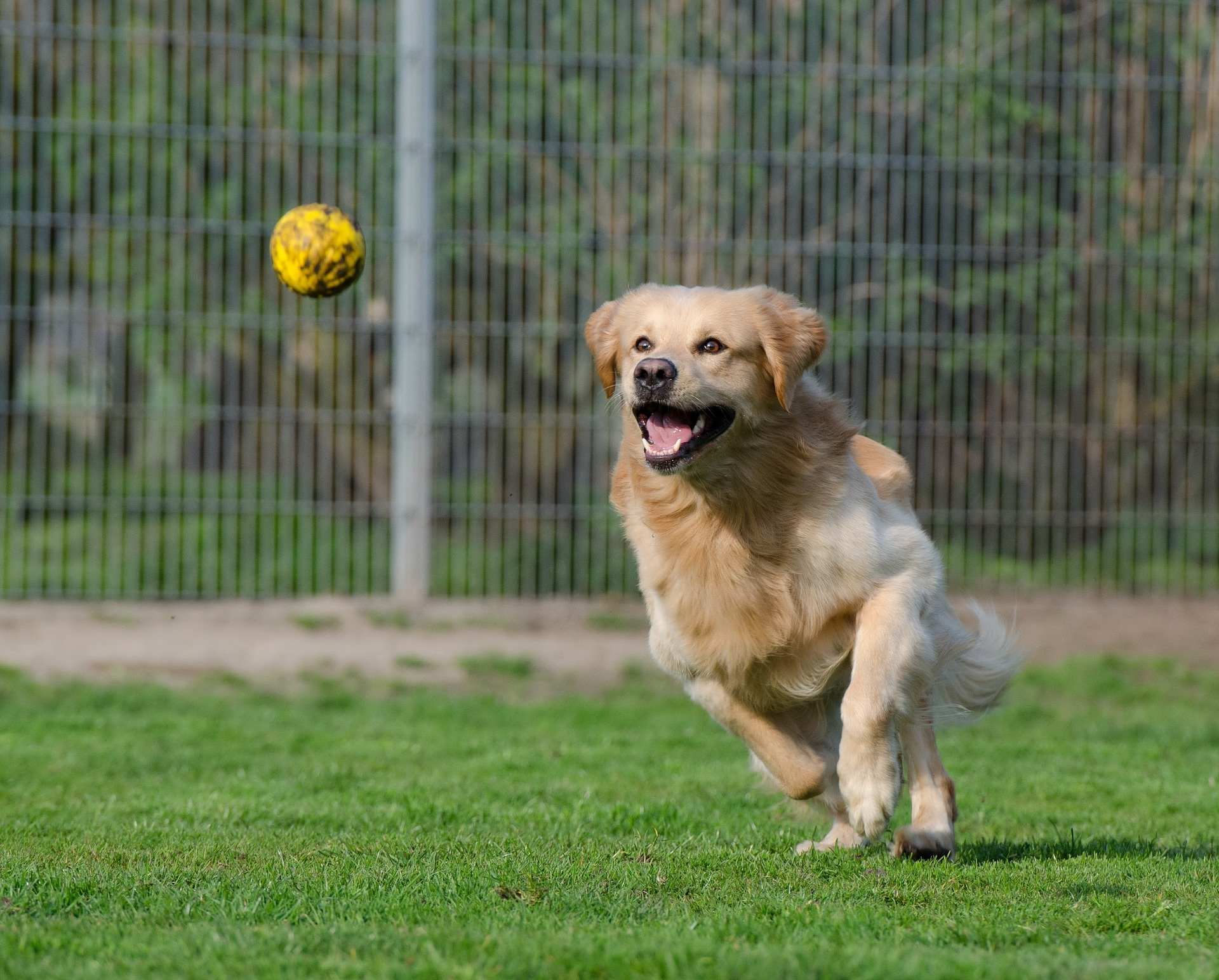 meilleur lanceur balle chien